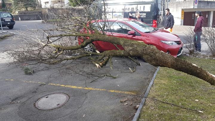 Baum auf Auto nach Sturm