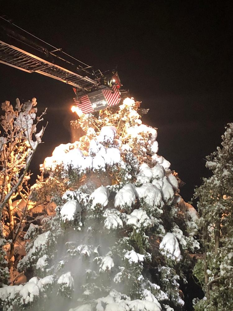2021/1 Baum Schnee