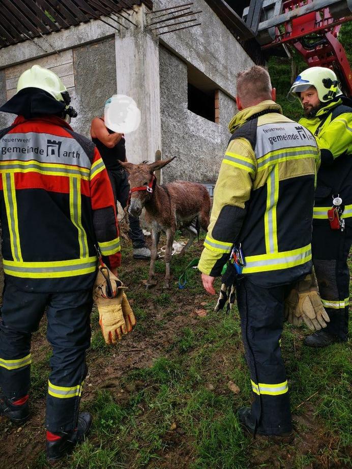 2021/24: Arth, St. Adrian, Esel in Güllenloch